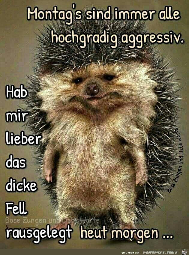 Lustig Witzig Guten Morgen Montag