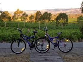 McLaren Vale on the Fleurieu Peninsula- Explore the picturesque Shiraz Trail and the many cellar doors that lie along it.