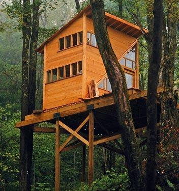Treehouse in NY