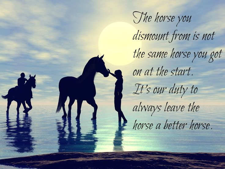 28 best images about Inspirational Horse Quotes on ...