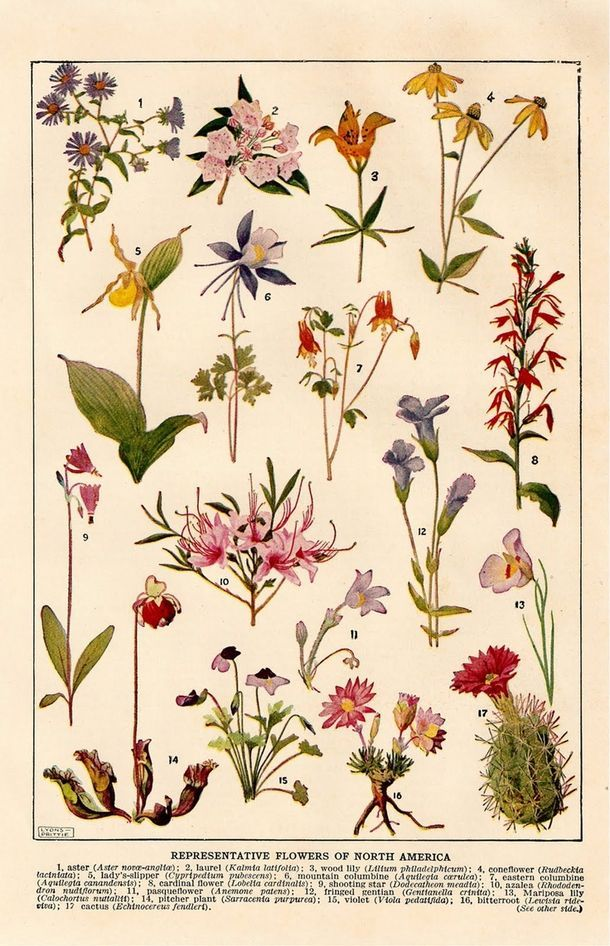 Ботанические принты в интерьере