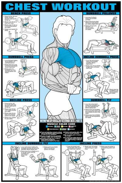 Dumbbell Workout Program | Chest Workout - Bench Press Fly Barbbell Dumbbell Exercise Gym