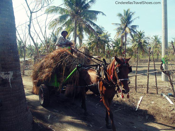 Horses are eveywhere in Gili Trawangan