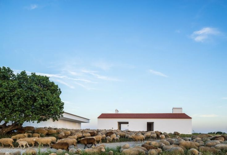 aboim inglez arquitectos · Monte da Azarujinha. Portugal