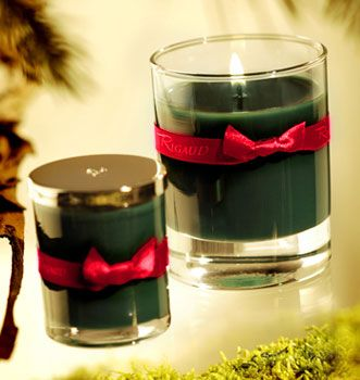 """""""Aromatic fragrances"""" family - Cyprès fragrance - Scented candles and home fragrances - Rigaud Candles"""