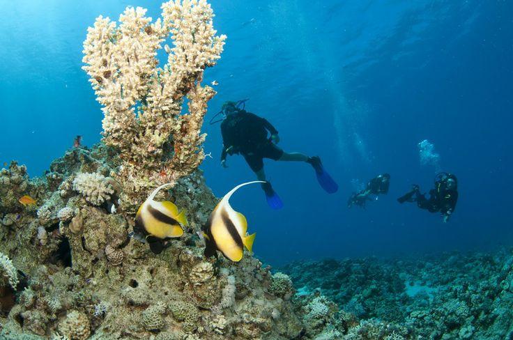 Scuba diving in Greece CallGreece.gr