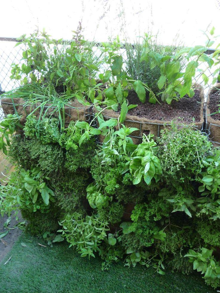 les 25 meilleures id es de la cat gorie mur d 39 herbe sur pinterest jardini res murales herbes. Black Bedroom Furniture Sets. Home Design Ideas