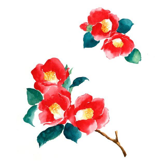 寒椿,ツバキ,冬の花,高塚由子,Yoshiko,Taaktsuka,水彩画,Watercolor,イラスト