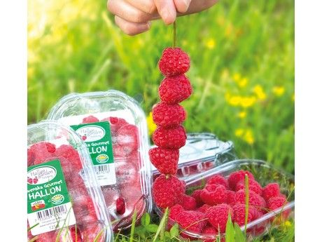 Sweden: Warm spring makes for successful summer fruit season