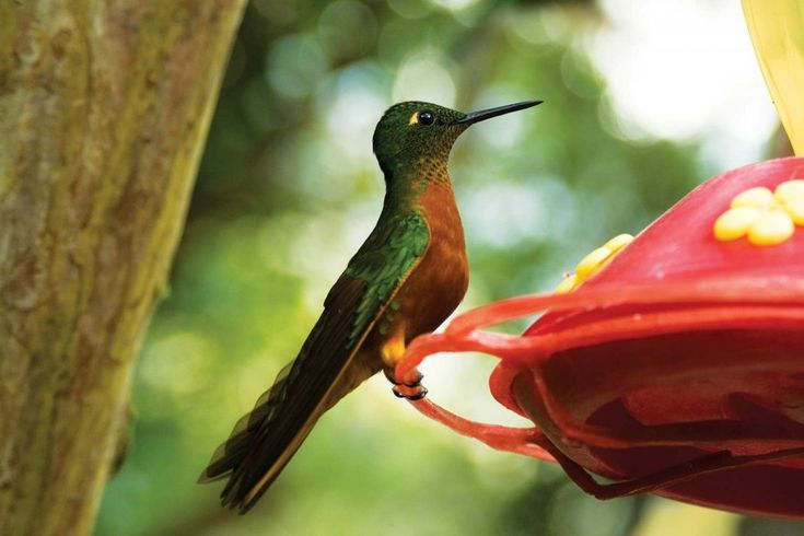 The bird watching tours with an on-site biologist are especially popular.