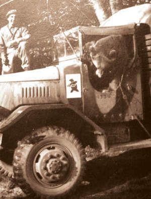Wojtek as a grown up bear in an ammo truck, near Monte Cassino, Italy. Note the unit emblem.