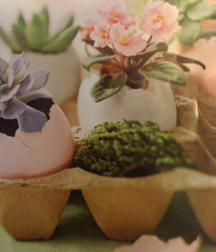 Succulents and other plants in egg shells