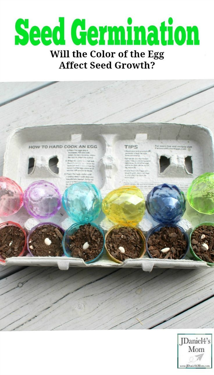 Seed Germination Will the Color of the Egg Affect Seed Growth