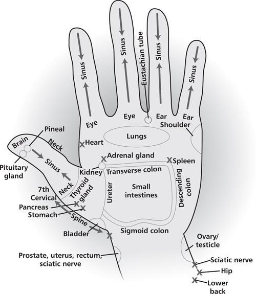Energy areas of your hands that can be used for acupressure, energy healing, as well as direct hand massage to get the energy flow patterns for these areas of the body in a high vibrational format. Try drawing the Reiki Power Symbol over the area before you begin any type of healing work to amplify the session. http://www.healingartforms.com/