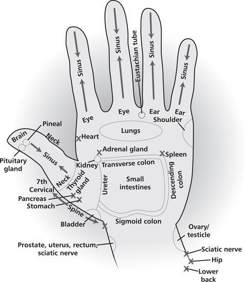 Áreas de energia de suas mãos que podem ser usados para a acupressão, cura da energia, bem como a massagem da mão direta para obter os padrões de fluxo de energia para essas áreas do corpo em um formato de vibração elevada.