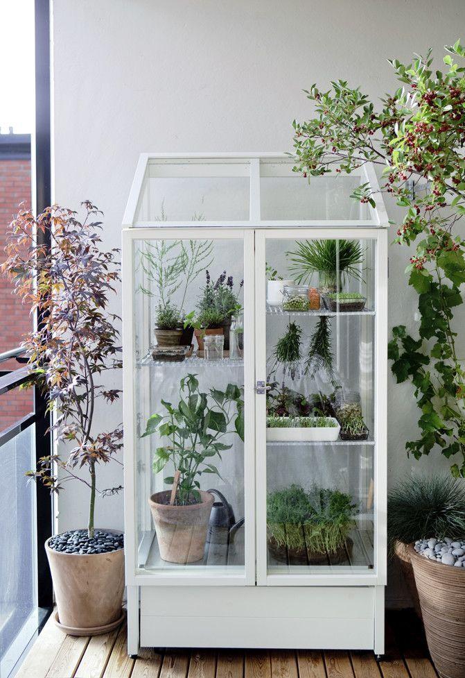 Der Balkon Unser Kleines Wohnzimmer Im Sommer 15 Die Gemutlichen Balkon In 2020 Balkon Pflanzen Krautergarten Drinnen Zimmerkrauter