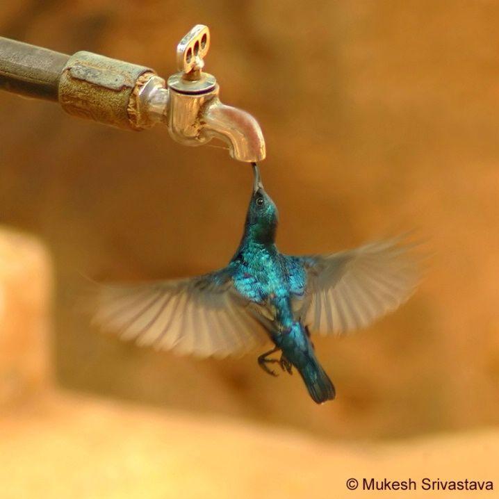 Thirst  betterphoto.com: Photos, Humming Birds, Animals, Nature, Beautiful Birds, Things, Hummingbirds, Photography