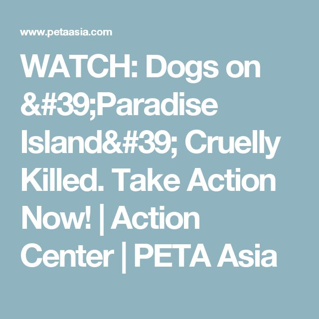 WATCH: Dogs on 'Paradise Island' Cruelly Killed. Take Action Now! | Action Center | PETA Asia