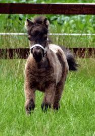 pony's, paarden en veulens - Google zoeken