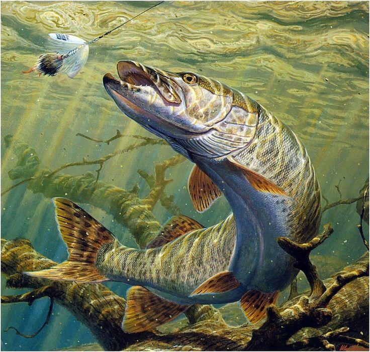 Картинка с рыбами щука