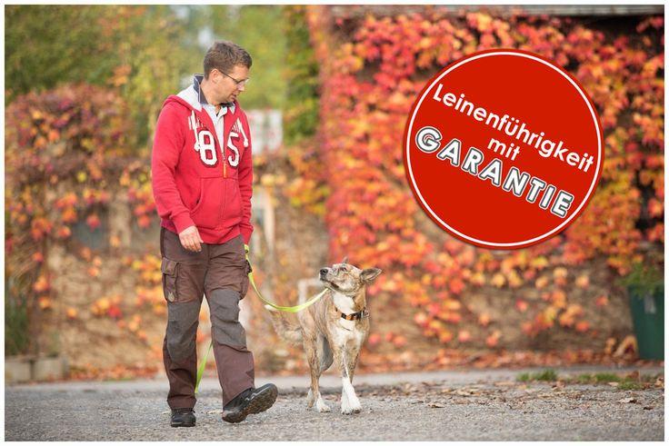 Leinenführigkeit Garantie Hundeschule Dresden