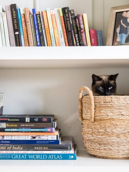 Cum să faci din apartament un loc mai distrativ pentru pisica ta