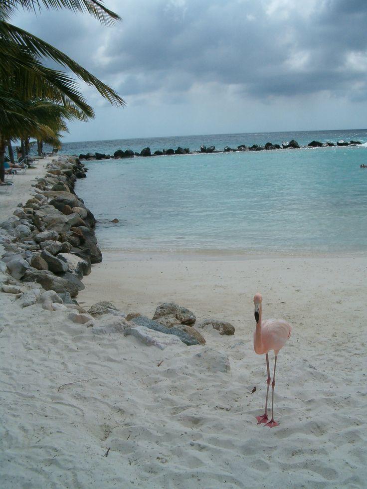 Aruba 92 best Aruba images on Pinterest