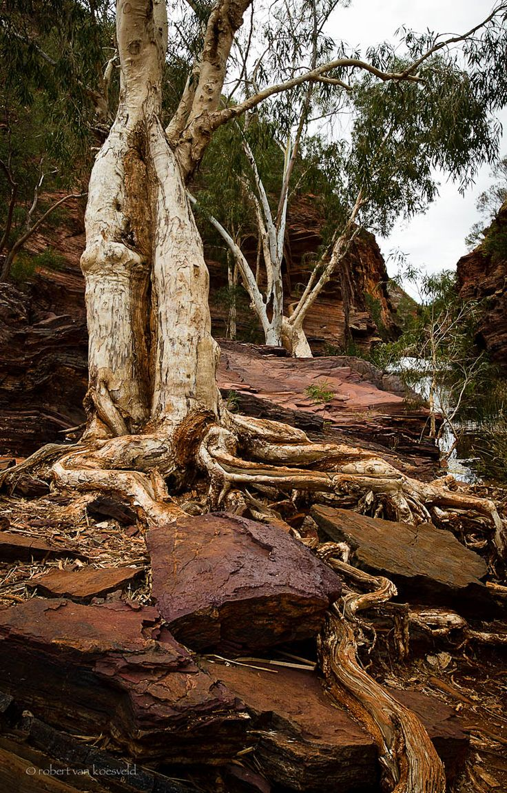 Gorge scene Karajini National park, North-Western Australia.  From a current series. Robert van Koesveld  Submitted by learningtosee
