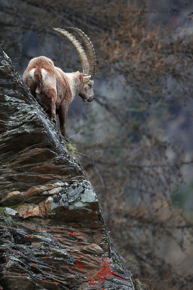 Ibex - 'Power is nothing without control' by Stefano Franceschetti