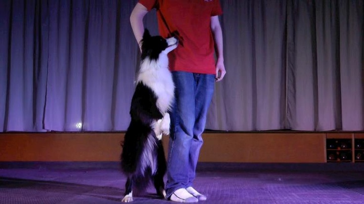 """Check out this video of Tristan Underwood and his Border Collie """"Magic"""". http://www.youtube.com/watch?v=DnzxiLUtrUk"""
