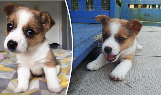 Dog Cruelty: Britain's most adorable Puppy dumpedin acardboard box