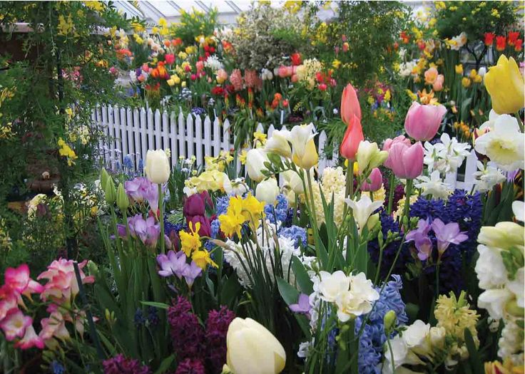 Beautiful Bulb Garden: Tulips, Hyacinth, Crocus, Narcissus, Etc