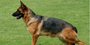 Funny Dog Names - Find funny Name for your Dog