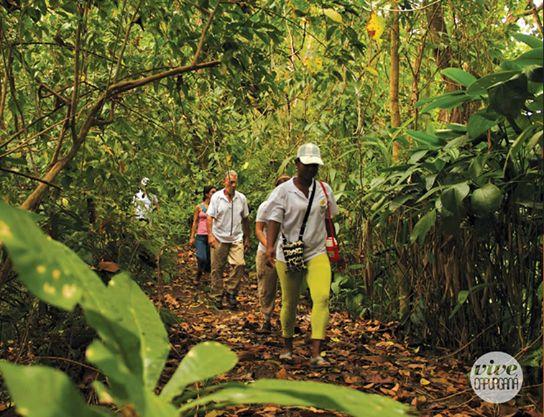 En Capurganá te conduciremos por caminos que llevan a cascadas, bosques, miradores y ríos que complementan nuestras rutas ecológicas.
