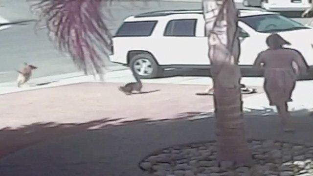 Cat saves boy from dog attack - video | World news | The Guardian