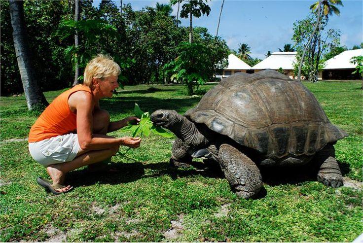 Aldabra, Seychelles  | ... Tortoise, Seychelles. All pictures above © Seychelles Tourism Board