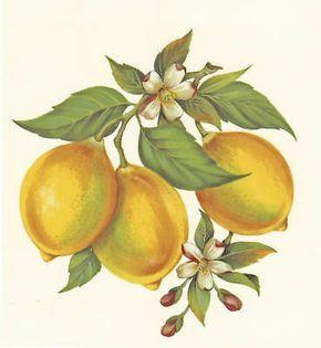 Details about Ceramic Decals Yellow Lemon Fruit Floral Branch