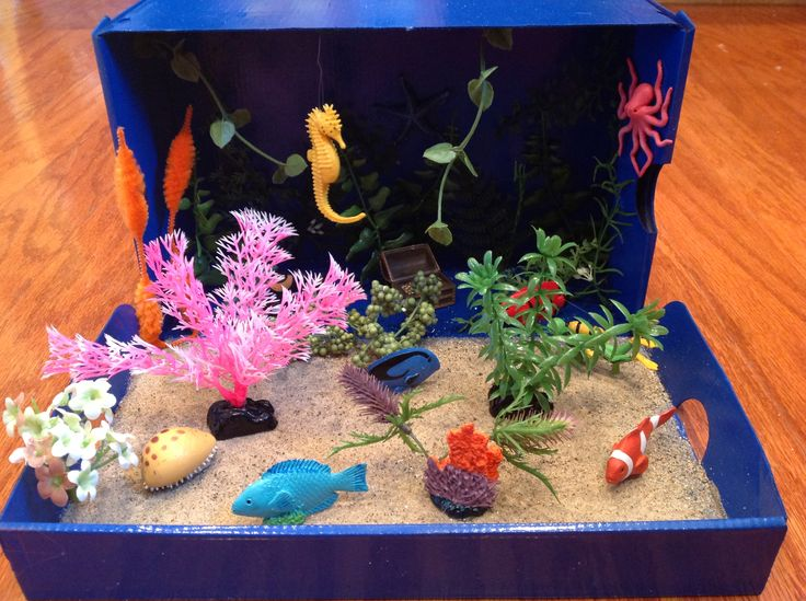 Coral reef diorama we made for first grade school project.