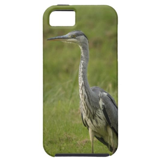 Grey heron by a pond iPhone 5 cover