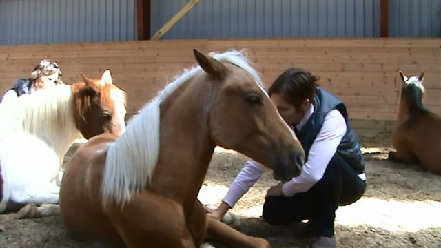 Dear friends - did you know horses love to be friends and that you are just with them as with your friend in human world?