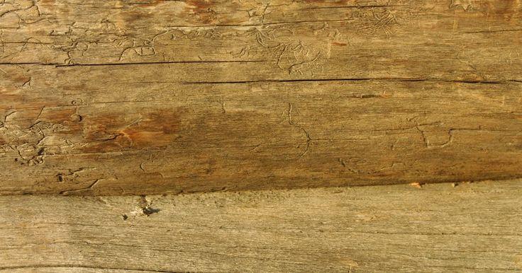 Como fazer mesas de compensados naturais. Mesas de compensados naturais de madeira são peças chaves em uma sala de estar e são adições resistente e bonitas para qualquer cômodo. Uma mesa com um tamanho para se tomar café não é muito difícil de se fazer, pois você pode usar um toco de árvore natural como pedestal, o que não só fornece uma base forte, mas também acomoda o topo de compensado ...