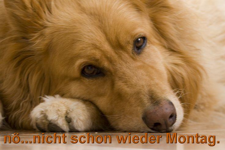 Montag - GB Bild