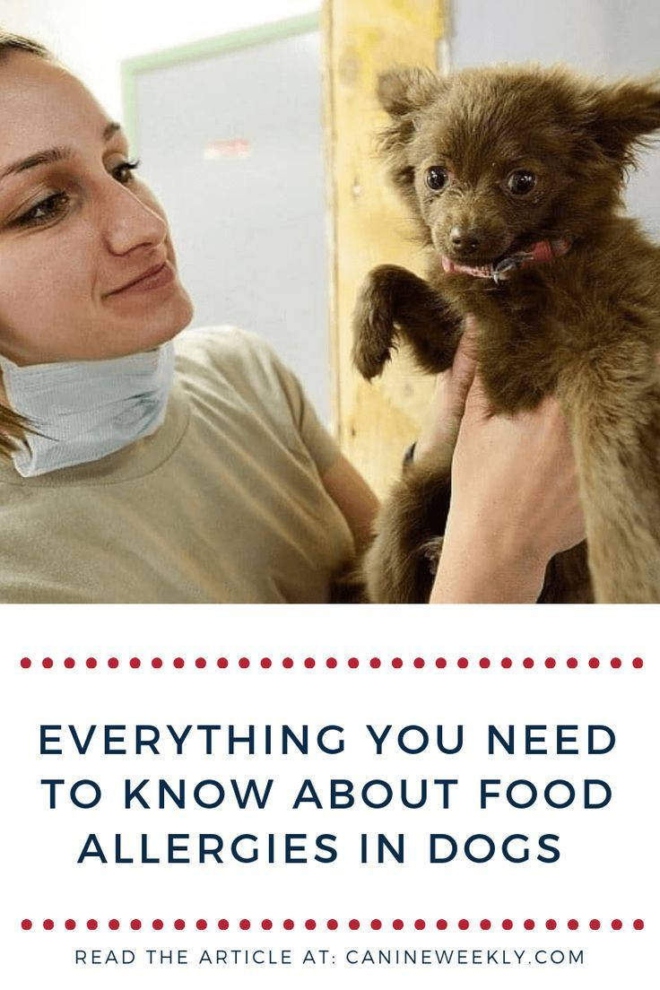 The Indications Of Food Allergies In Dogs Can Differ From One Dog