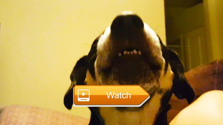 Talking Dogs FUNNY DOGS TALKING AND SINGING Funny Pets  Does your dog talk like that Send it to us Subscribe for weekly videos If you think your god is cool because he catches the ball  on Pet Lovers