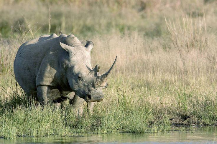 Take a tour of the Born Free Sanctuary at the stunning Villa Lobengula at Shamwari Game Reserve in South Africa