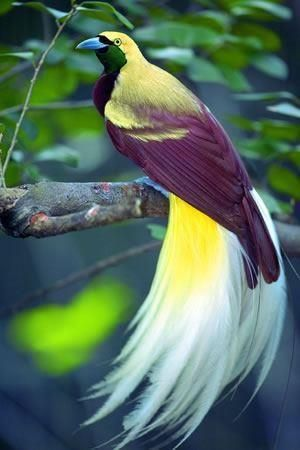 Exotic Bird of Paradise.  Beautiful colours and u can c them in New Guinea or in Cuba I think but, they r on the coins in Cuba. I have one paso from Cuba with the bird of paradise.