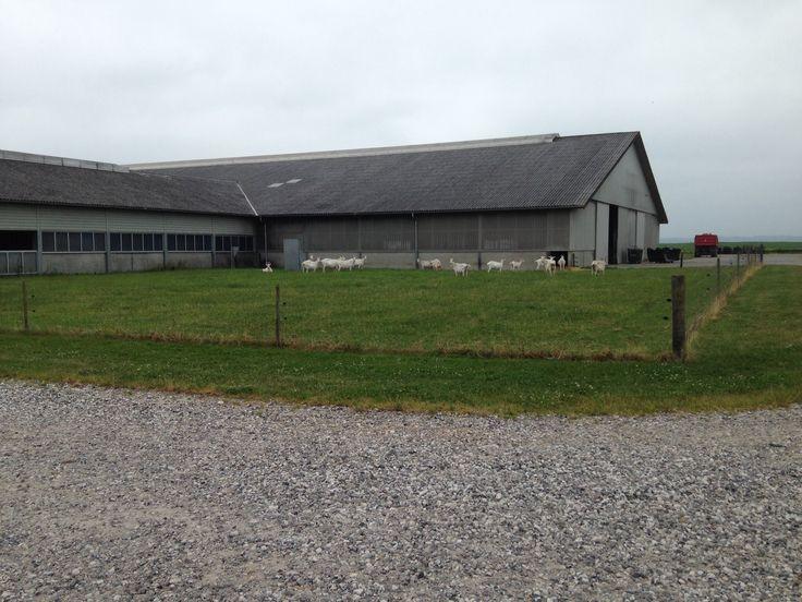 Gede farm på nord Djursland