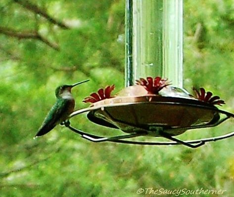 Homemade Hummingbird Nectar Recipe | The Saucy Southerner