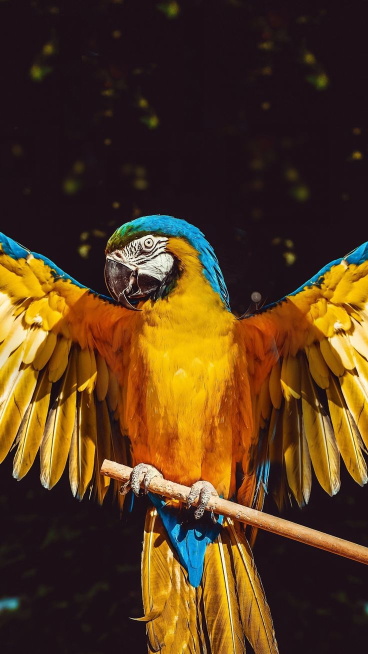 Open wings, parrot, bird, 1080x1920 wallpaper Animals