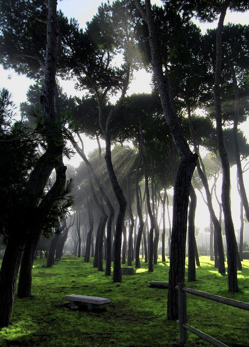 Rays of Light ~ (by luciano dionisi)  Pineto, Abruzzi, Italy.